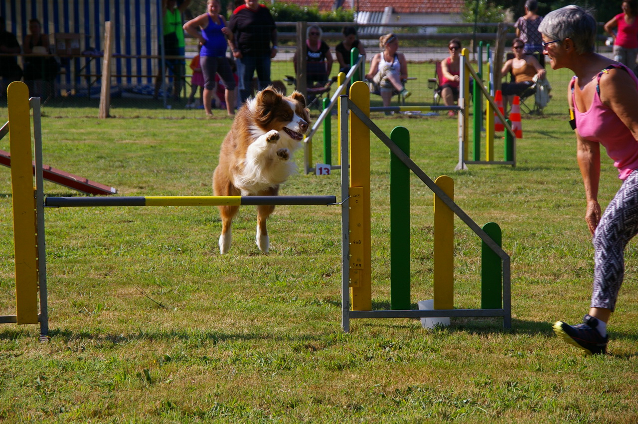 Grand Concours d'Agility